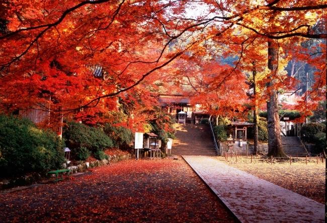 秋の大興善寺