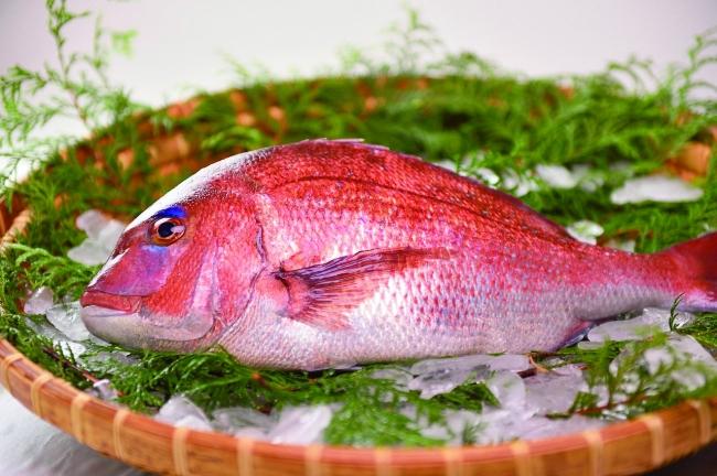 ブランド魚「仮屋湾の真鯛」