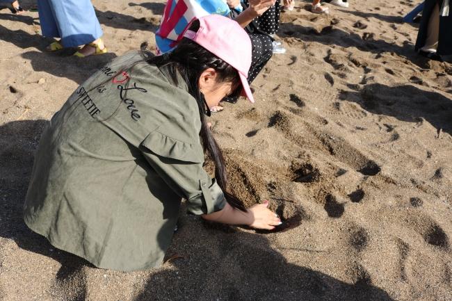 <過去のウミガメ保護体験ツアーの様子> ウミガメの砂掘りを体験