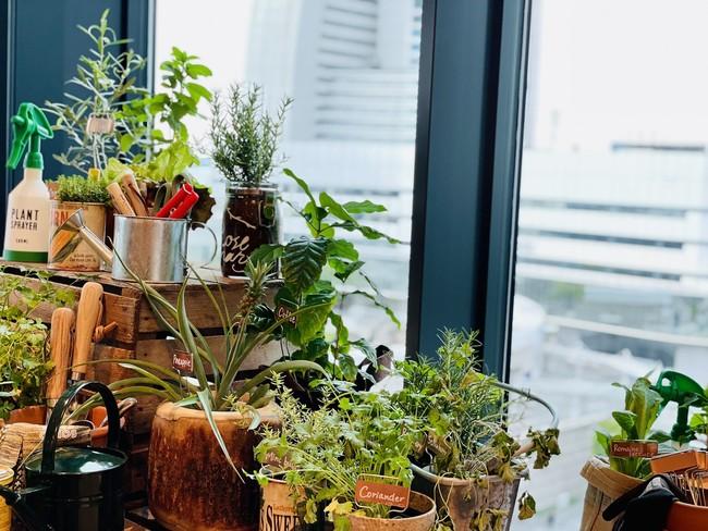 食にまつわる植物をオフィスの各所に配置