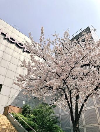 Hoop Sakura Jack