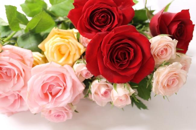 365本の薔薇をフットスパに浮かべる(イメージ)
