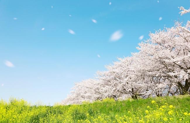 春のお悩み 1位は花粉症、2位は眠気、3位は寒暖差。