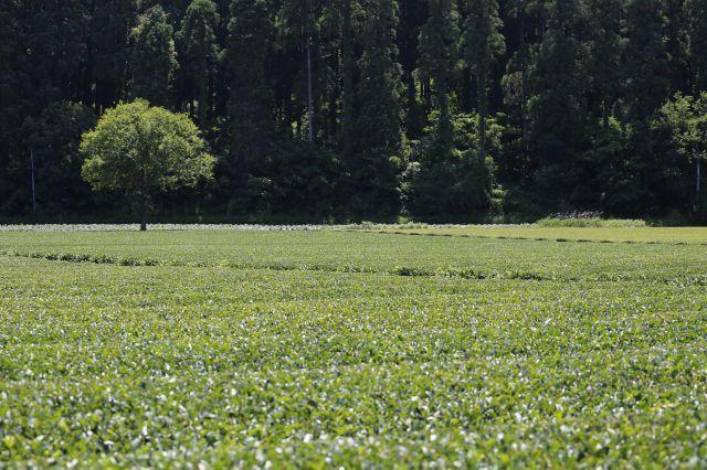 宮崎県は全国第4位の生産量を誇るお茶どころ。高い品質のお茶が、熱意ある生産者によってつくられています。