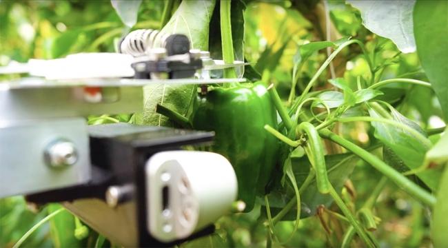 北九州高専と共同開発した農業ロボット『L』。宮崎県新富町にはスマート農業ベンチャーの持つ技術やアイデアに対し、高い関心を寄せる若手農家や実証実験に適した圃場など、優れた環境が用意されています。