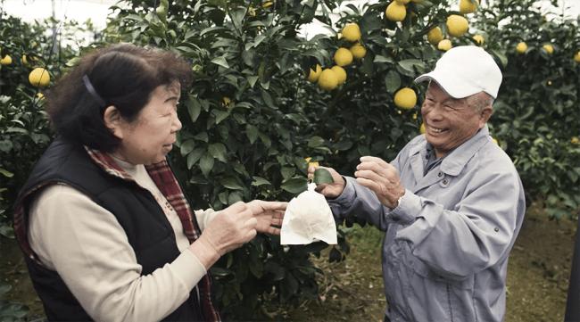 農業の町・宮崎県新富町でも高齢化は進行していて、近い将来の担い手不足が危惧されています。