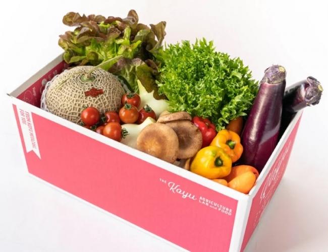 写真は「新鮮詰合せ!野菜・フルーツセット」のイメージです。