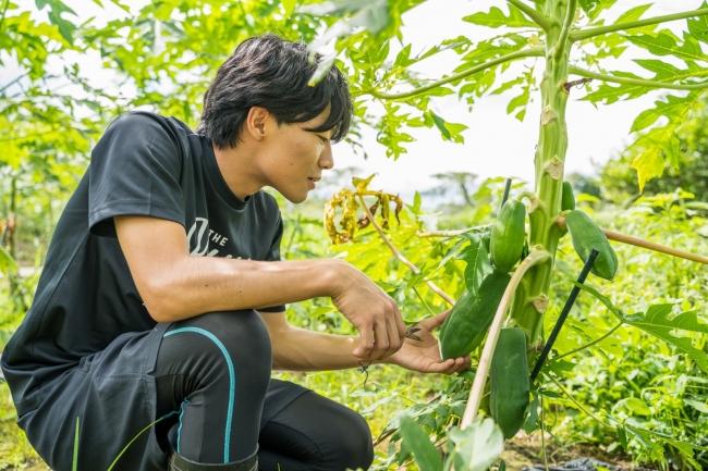地域おこし協力隊としてパパイアを使った商品開発をしている、パパイア王子こと岩本脩成さん