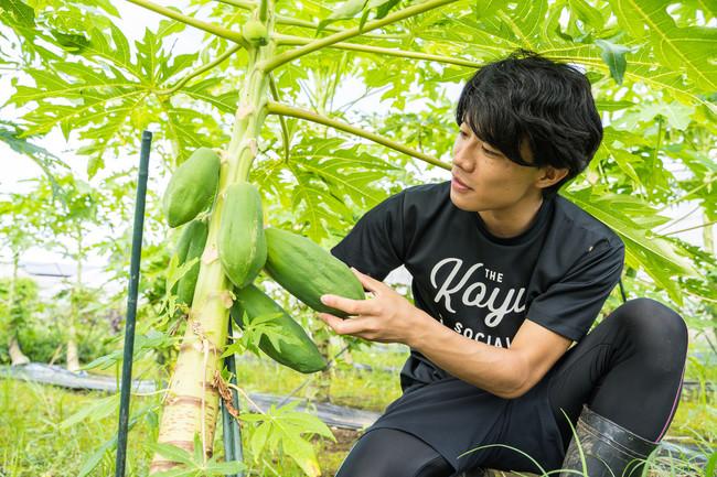 「青パパイアで世界を健康に」と青パパイアの生産と商品開発に取り組む岩本脩成さん