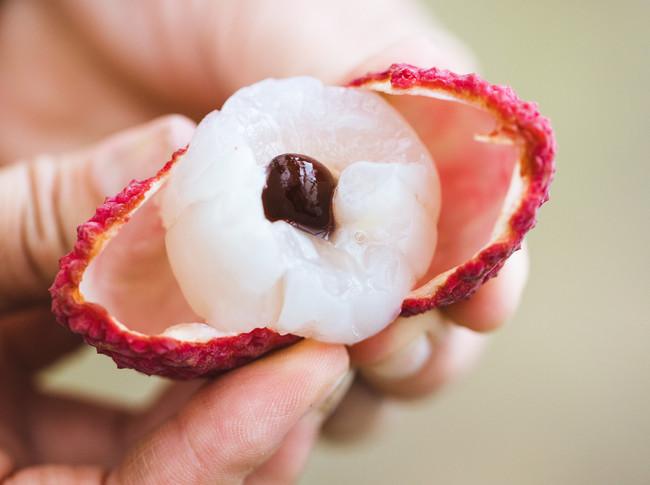 糖度15度以上、プレミアム1粒50g以上という圧倒的な品質こそ、国産生ライチの価値を認識させた。(Photo @Waki Hamatsu)