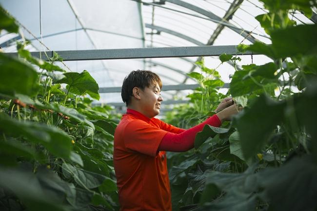 新富町のキュウリ農家、  猪俣太一さんは若手農家を中心にスマート農業を研究するチーム「儲かる農業研究会」に所属。  農業の見える化に取り組んでいます。