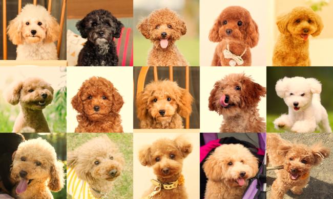 ペットの顔写真から病気を予測する疾患予測するAIシステム