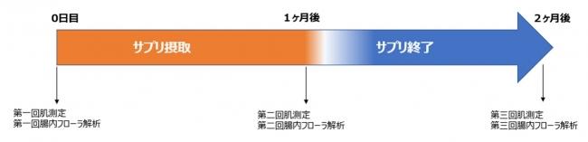 図1:サプリ服用期間と測定のタイミングについて