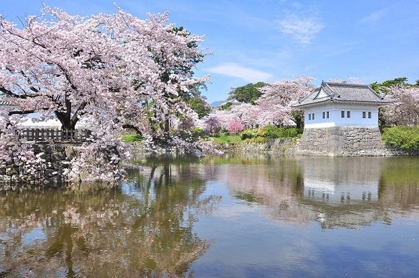 桜と小田原城址公園