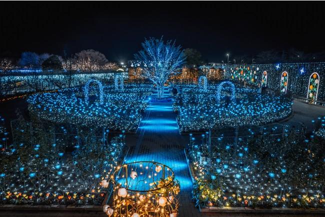光のバラ園 ブルーライトアップ