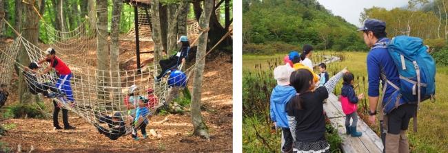 写真左:白馬岩岳「ブナの森パーク」、写真右:栂池高原「栂池自然園」