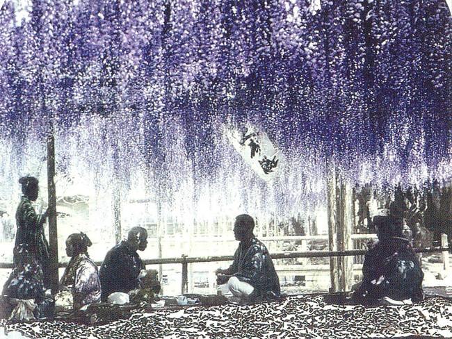 亀戸天神の下で藤を楽しむ人々