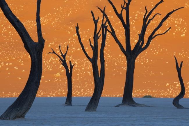 フランス・ランティング「朝日が描く絵画」