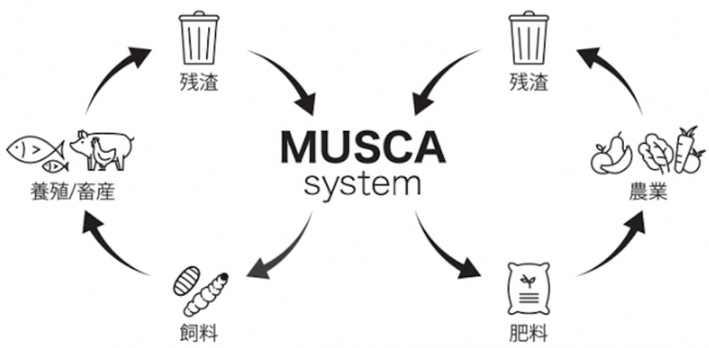 MUSCA System
