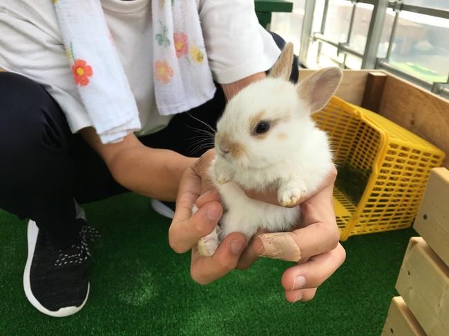 8月にウサギの赤ちゃんが2羽生まれました。期間限定で「子ウサギ広場」を開設しています。