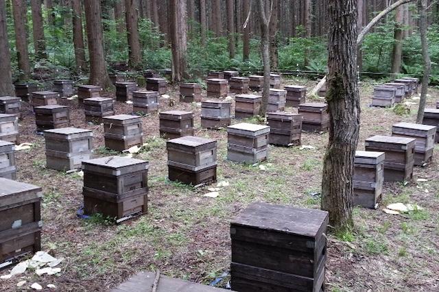 1箱に40,000匹のミツバチが1匹の女王蜂と暮らしています。