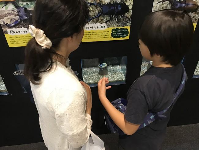 昆虫生体展示