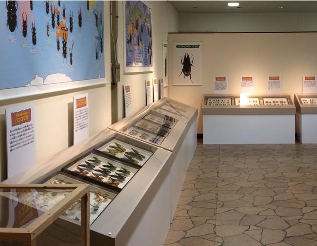 昆虫標本展示