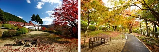 山のホテルと庭園の紅葉                紅葉の小径