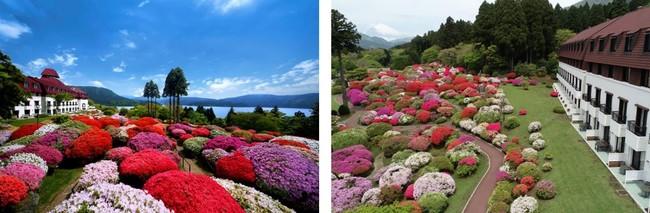 """""""小田急 山のホテル""""のツツジ庭園と芦ノ湖         富士山を背景に咲き誇るツツジ"""