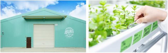 (画像左)IBUKI外観イメージ:IBUKI YOKOHAMA FARM