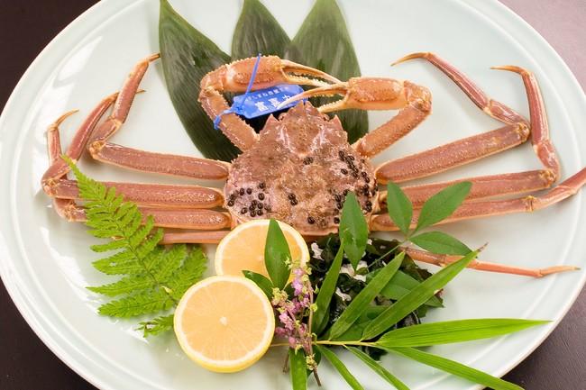 松葉蟹「活蟹」