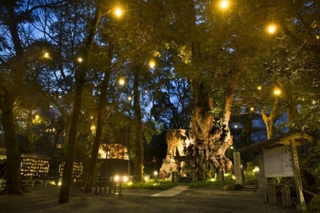 來宮神社(ライトアップ)
