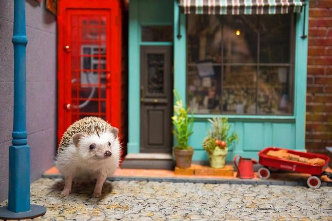 大好きなペット(小動物のみ)も撮影して写真集に!