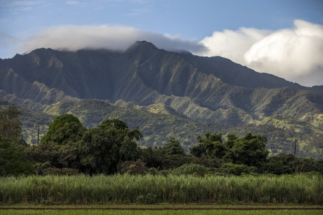 ワイアナエ山脈の麓、クニアに広がるサトウキビ畑