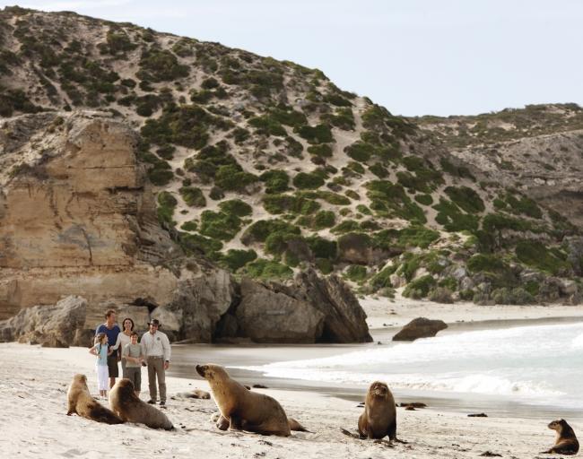 豪シールベイ(C)Tourism Australia