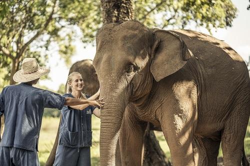 象と散歩(イメージ) ※象にはお乗りいただけません。