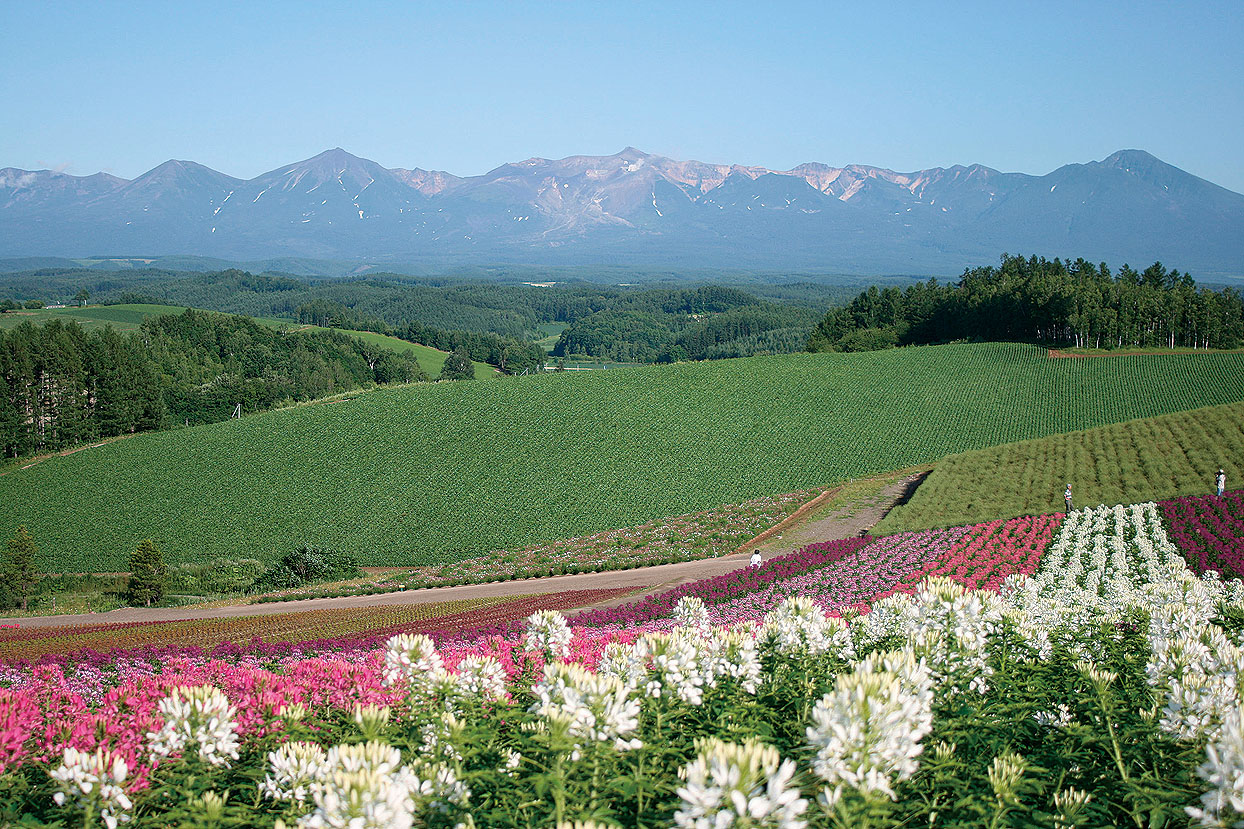 全コーススイーツクーポン付き!おいしい・楽しい北海道を、おトクに満喫!JALで行く「夏旅 北海道」発売開始!