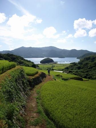 国の重要文化的景観「久賀島」の棚田