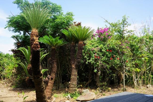 南国の植物が茂る庭