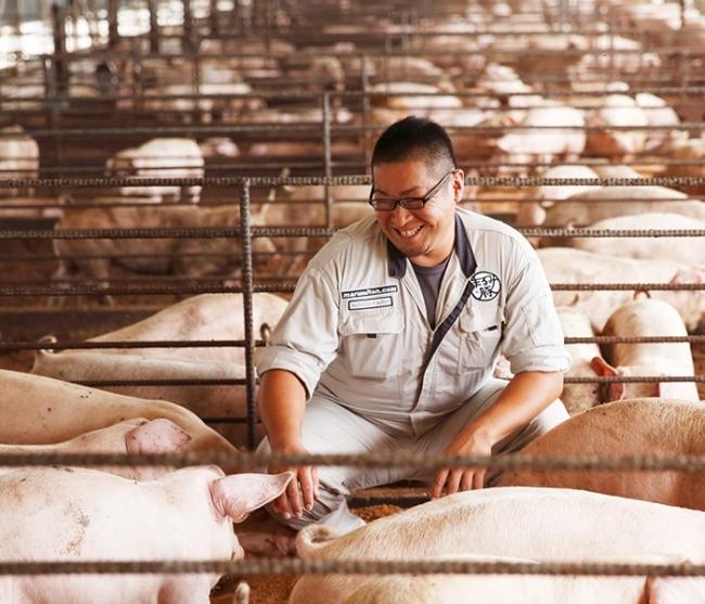 協同ファーム養豚場