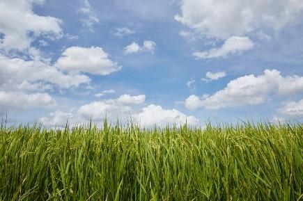 田園風景(川越藩のお蔵米)