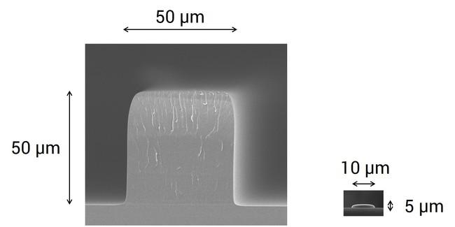 開発したマイクロ流路用構造体(左)と液晶用 カラーフィルタの構造体(右)の比較 (C) TOPPAN INC.