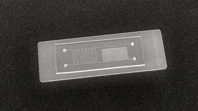 凸版印刷のマイクロ流路チップ(試作品) (C) TOPPAN INC.
