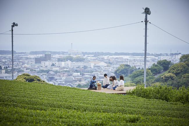 海の碧と茶畑の緑のコントラスト