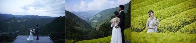 イメージ 撮影場所:天空の茶の間(豊好園)、黄金の茶の間(黄金みどり茶園)