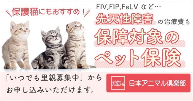 飯 保険 猫