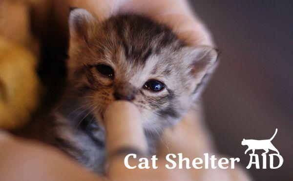Cat Shelter Aidとは