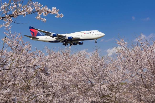 優秀賞「満開の桜と空の女王」