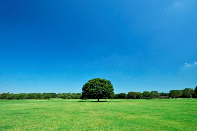 ※国営昭和記念公園