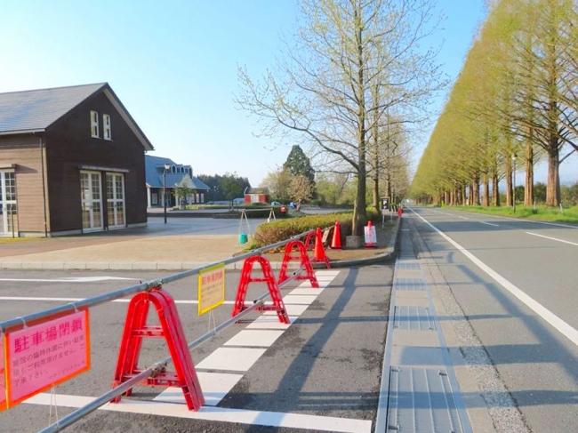 駐車場が閉められているメタセコイア並木